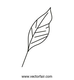 leaves line icon style, leaf nature organic