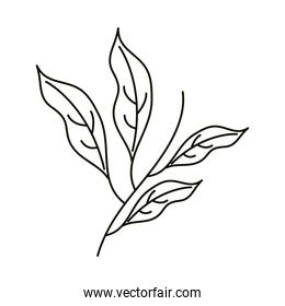 leaves line icon style, leaves stem floral