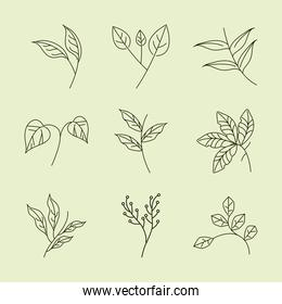 leaves line icons set style, branches foliage nature decoration