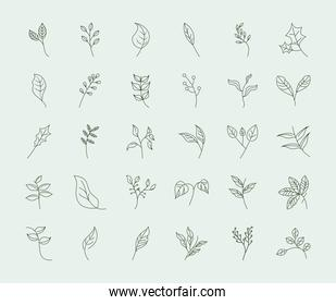 leaves line icons style, leaf branch plant foliage floral