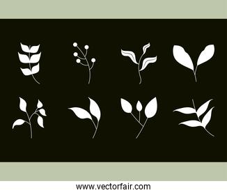 leaves silhouette icon style, foliage and branches decoration