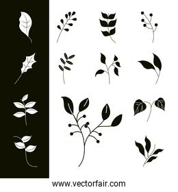 leaves line icons collection style, foliage natural ecology leaf