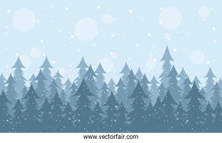 snow scape seasonal scene with pines forest