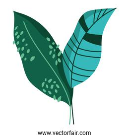 leaves decoration ornament foliage abstract style icon white background
