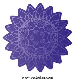 mandala of color dark purple with a white background