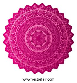 mandala of color dark pink with a white background