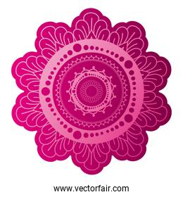 mandala of color fuchsia with a white background