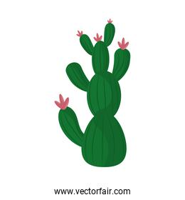 cactus or succulent plant nature isolated icon