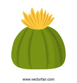 cactus or succulent with flower plant nature isolated icon