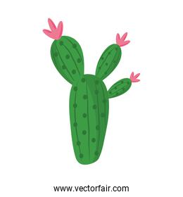 cactus or succulent plant nature botanic isolated icon