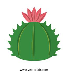 cactus or succulent plant nature floral isolated icon