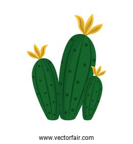cactus or succulent plant nature tropical isolated icon