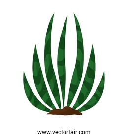 cactus or succulent plant nature organic isolated icon
