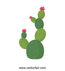 cactus or succulent plant nature cartoon isolated icon