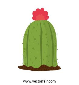 cactus or succulent plant botanical design isolated icon