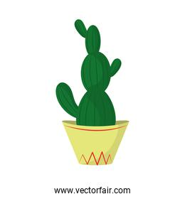 cactus in pot plant floral natural isolated icon