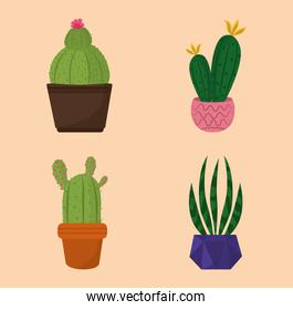 set of icons potted cactus decoration garden