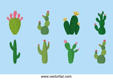 different cactus plant botanical decoration icons