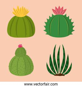 cactus plants decoration natural collection icons