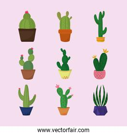 collection icons different cactus in pots decoration