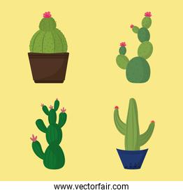 potted cactus or succulents nature ecology decoration icons