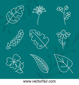 leaves and tropical leaves icon set, line style