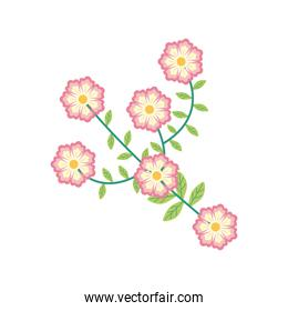 pink color flowers garden flat element