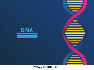 dna molecule structure and lettering in blue background