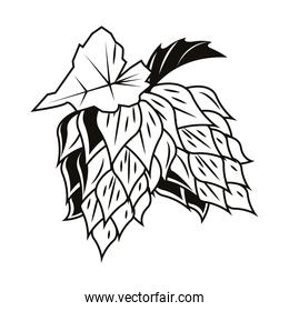 beer hops seeds organic icon