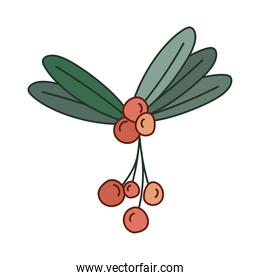 mistletoe with berries of red color
