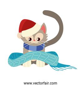 christmas, little cat with scarf and hat animal celebration