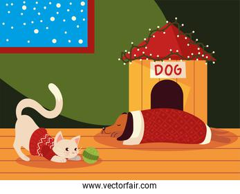 christmas cute cat and dog with sweater in the house