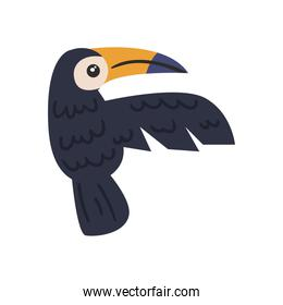 cute toucan animal on white background