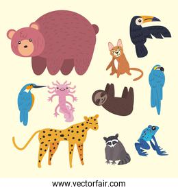 collection of cute group animals