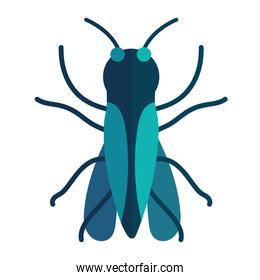 insect moth animal in cartoon flat icon style