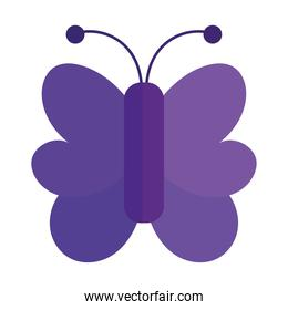purple butterfly insect animal in cartoon flat icon style
