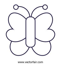 butterfly insect animal in cartoon line icon style