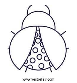 ladybug insect animal in cartoon line icon style