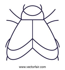 bug with wings animal in cartoon line icon style