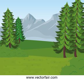 field camp landscape scene with pines trees