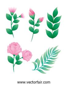 bundle of five beautiful roses flowers and leafs decorative icons