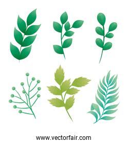 bundle of branches with leafs icons