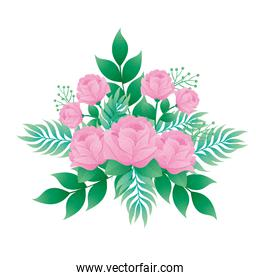 pink color roses flowers and leafs decorative icon