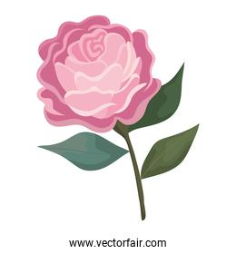 rose flower pink with leaves painting vector design