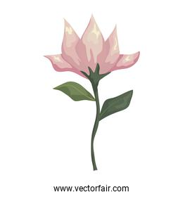 flower white with leaves painting vector design