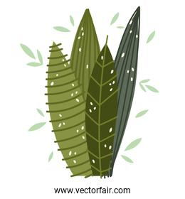 foliage leaves nature greenery frond design