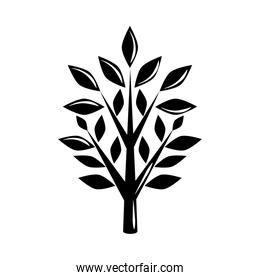 tree branches and leaves natural silhouette icon