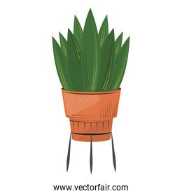 potted plant in stand nature decoration