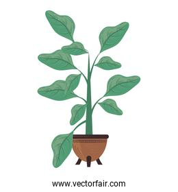 plants growing in pot nature decoration