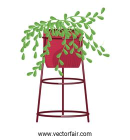 potted plant leaves greenery decoration